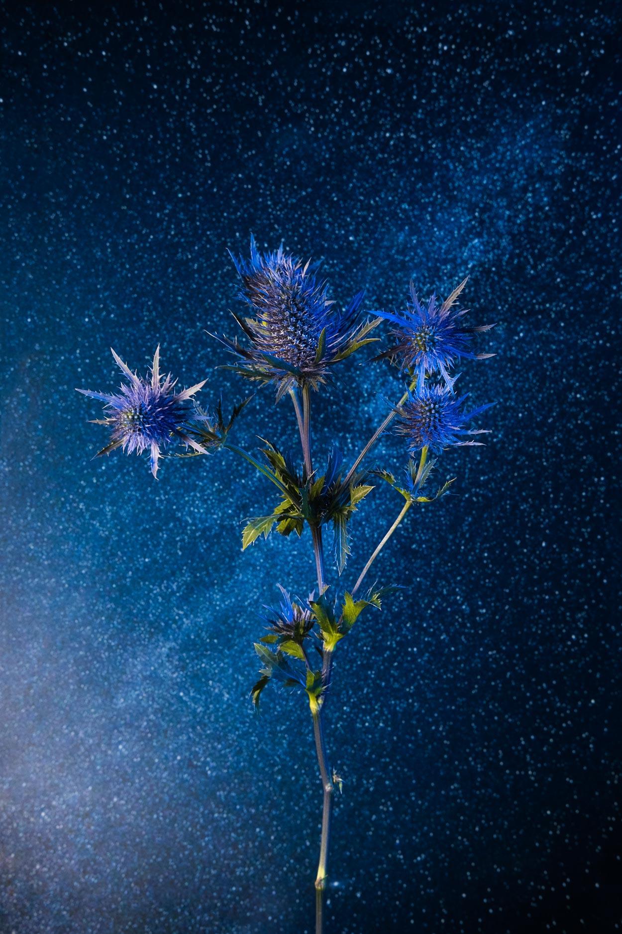 flowersinspace_01