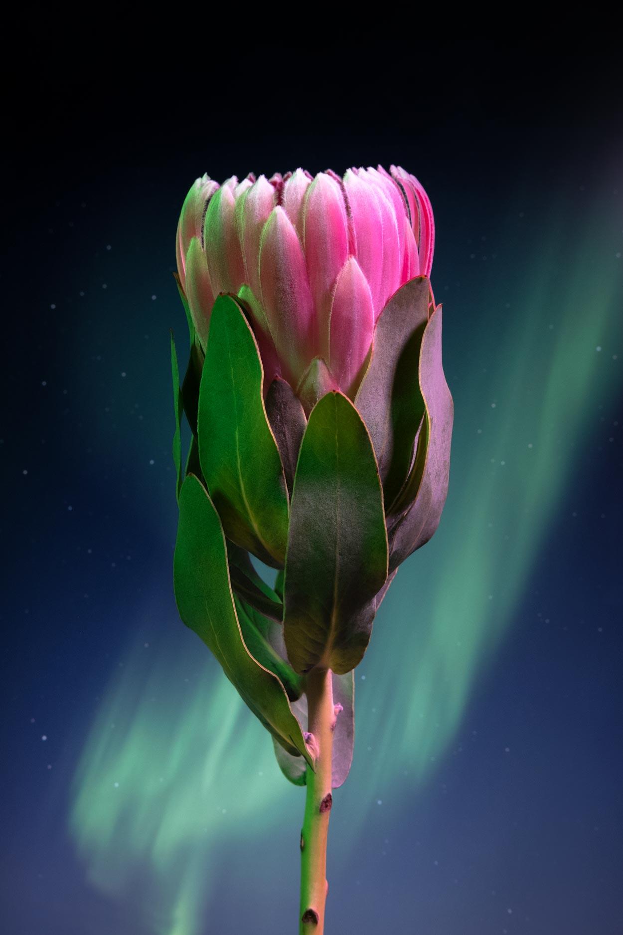 flowersinspace_10